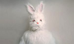 Nick Cave. The Death of Bunny Munro